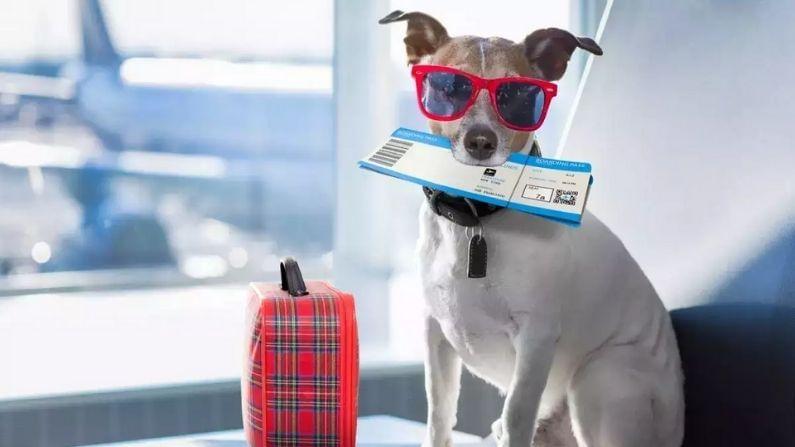 Dog Travelling Airplane